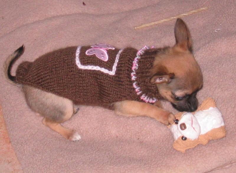 modèle tricot gilet pour chien