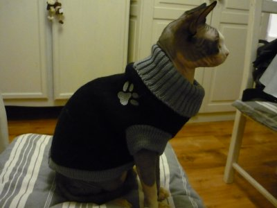 patron tricot pull pour chat