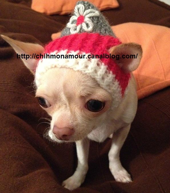 patron tricot bonnet chien