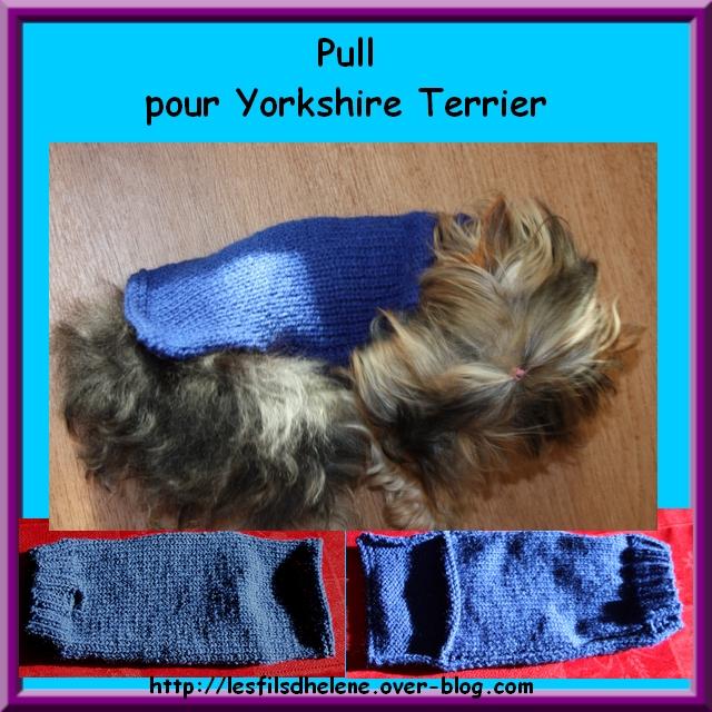 Mod le tricot pour chien yorkshire - Petit chien gratuit ...