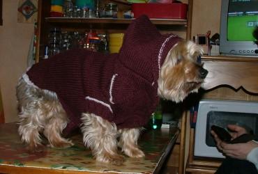modèle pull tricot pour york